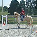 Jeux équestres manchots 2013 (250)