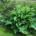Jardin de la Source 12061665