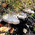 champignon-05711