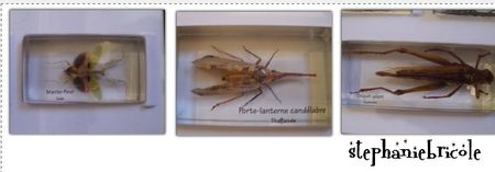 insecte_collection