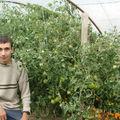 2008 08 19 Cyril devant ses tomates sous serre