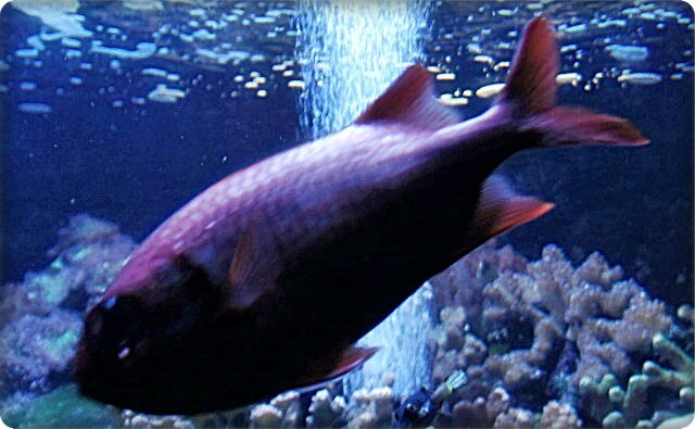 Aquarium de st gilles les bains 7 11 gratin de for Aquarium poisson rouge sans pompe