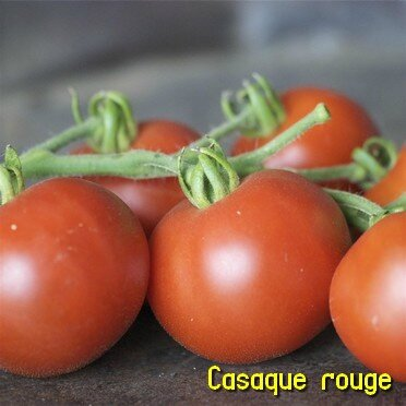casaque rouge