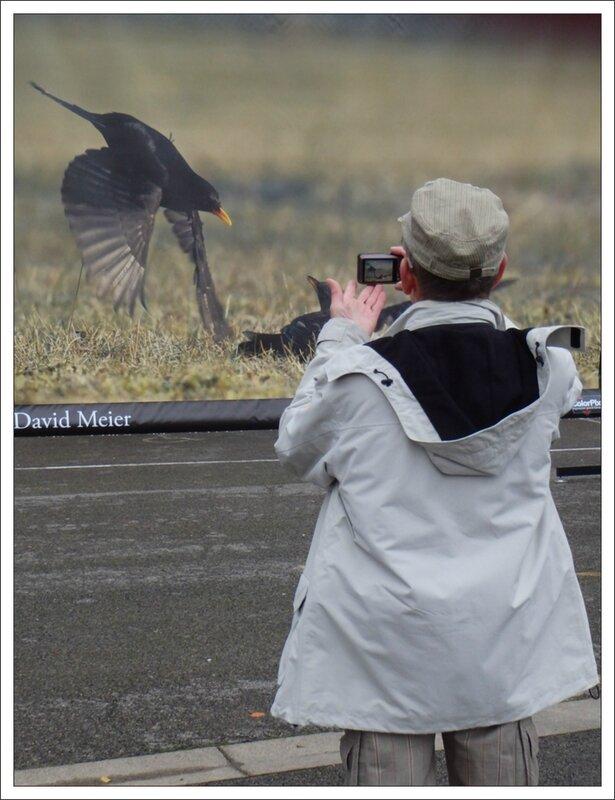 Montier photographe 5 merles