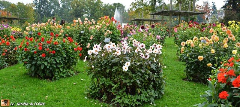 Dahlias-Parc-Floral