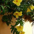 voyage en photo à l'ile de la Réunion...la flore et la faune