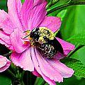 Faune et flore 6