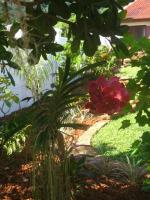 Fleur jardin ht