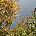 Arbres en automne