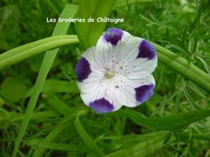 petite fleur blanche et violette