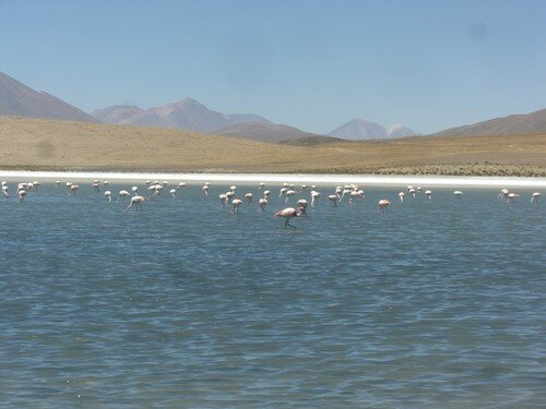 Sud de la Bolivie, laguna avec flamands rose