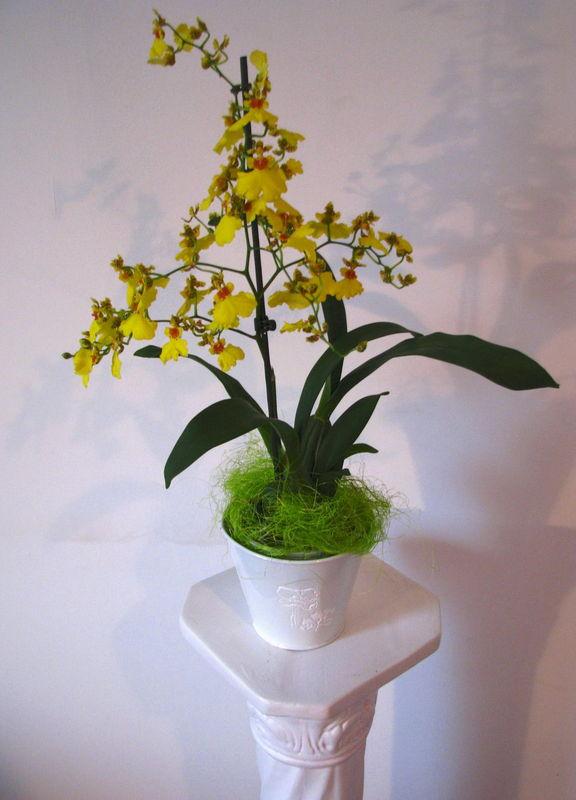Photo du jour les mots comme des fleurs ii for Commandes fleurs