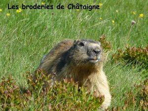 Marmotte (7)