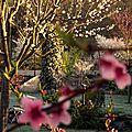 Windows-Live-Writer/jardin_B395/DSCF3440