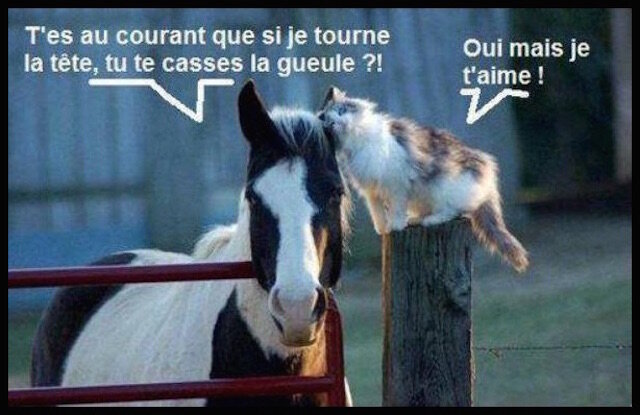 tendresse_cheval_chat