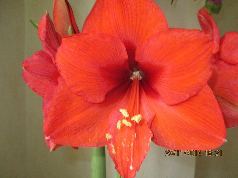 cette fleur pour vous souhaitez une bonne semaine,prenez soin de vous , grosses bises à tous et toutes ♥