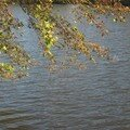 automne091