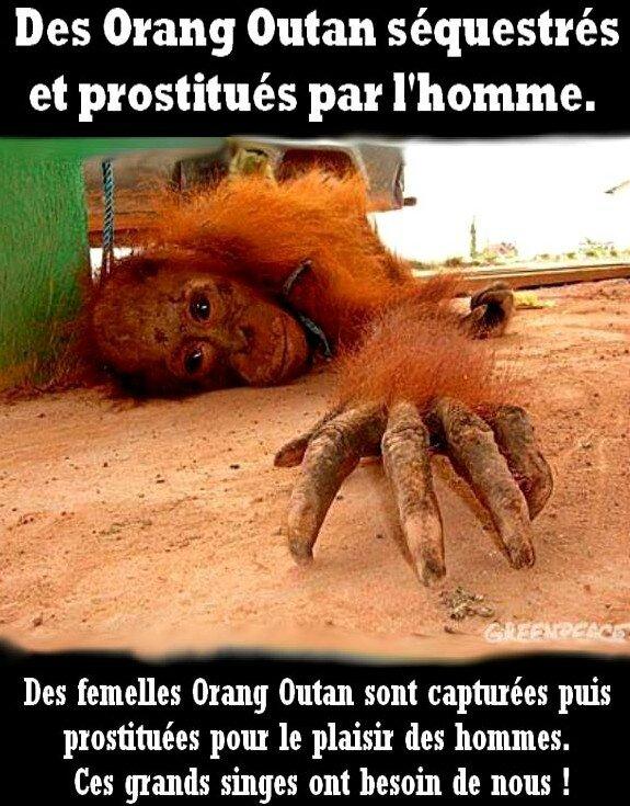 singe prostitué thailande