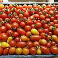 1 - TOMATES 2013-les varits que je plante