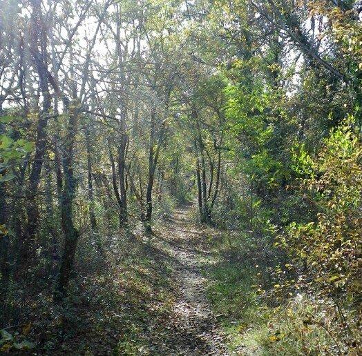le chemin à l'automne