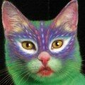 Peinture sur chat (3)