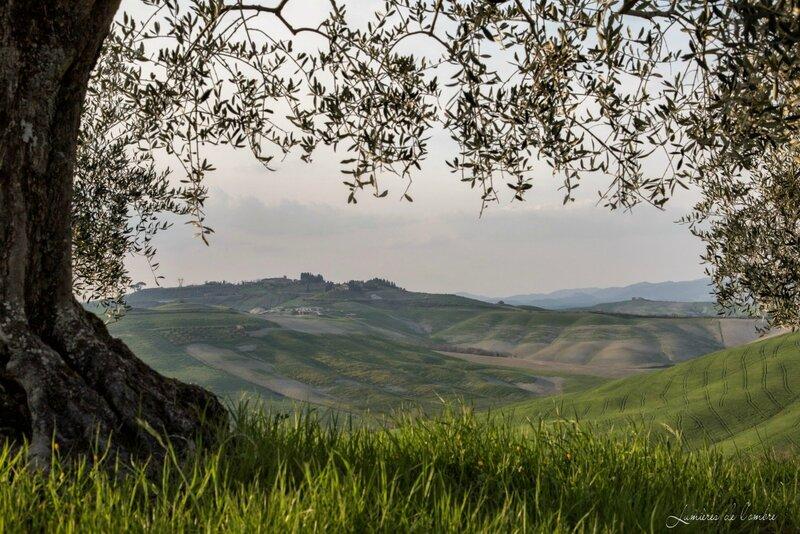 w_Toscane oliviers_20150412_6066r