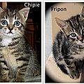 Chipie et Fripon bébés