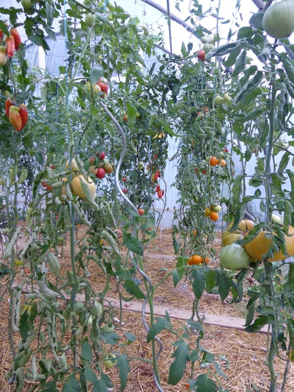 22-tomates (1)