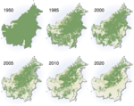 deforestation_facts_borneo