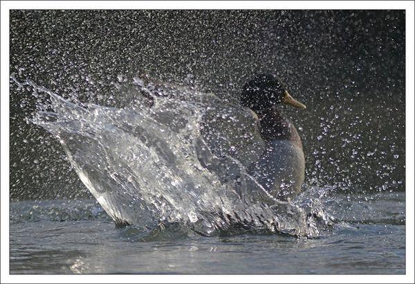 ville lulu canard bain gouttes 3 matin 111112