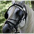 Fête du cheval à vernancourt