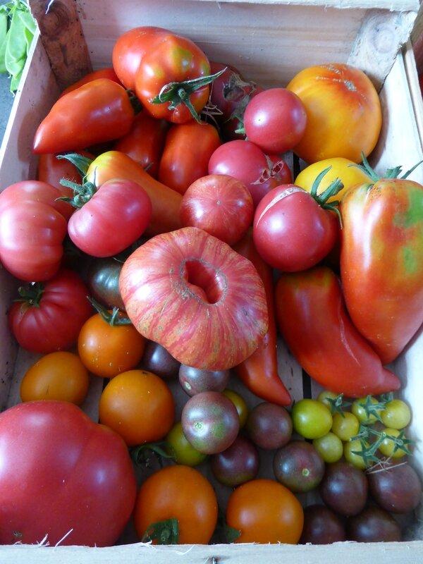 30-tomates du jour (1)