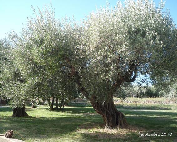 l_olivier