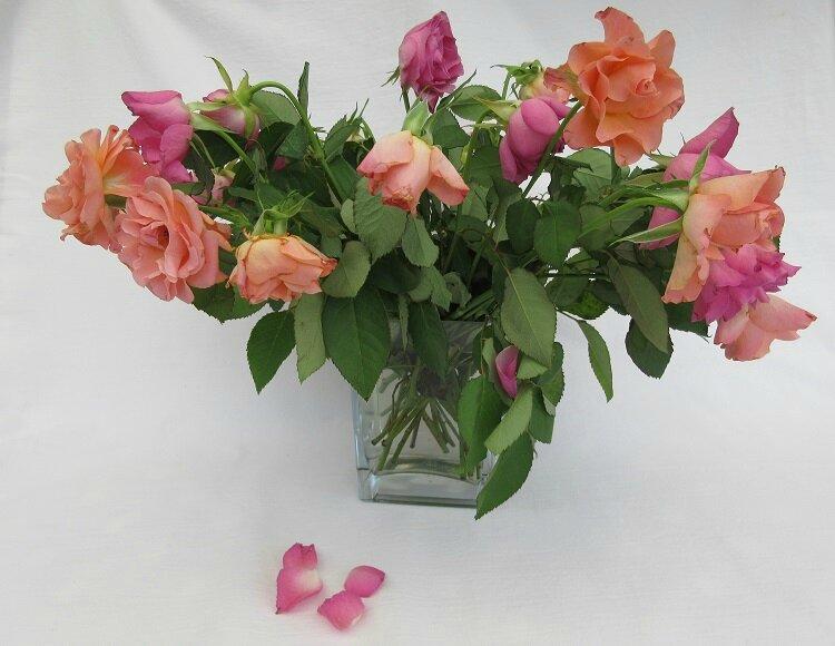 Roses de Fabie