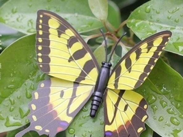 papillon 7 cm