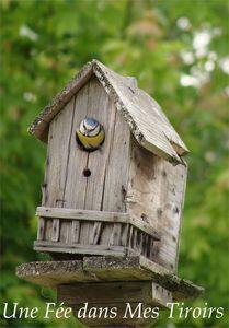 maison_oiseaux_2