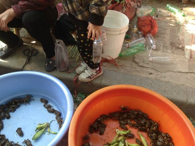 crabes bassines