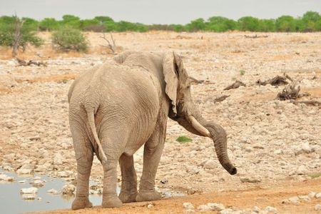Namibie (208)