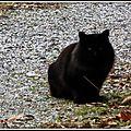 Chat noir 180215