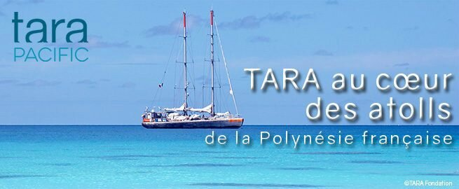 french-polynesia_PressRelease-655x270
