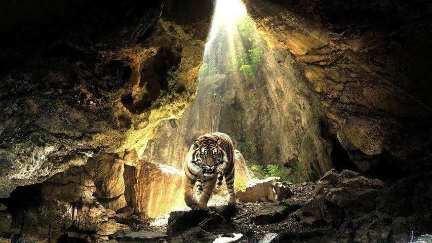 tigre caverne1984832394_n