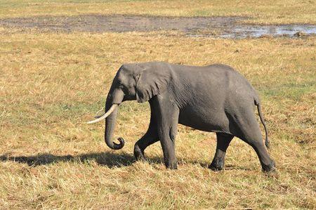 Botswana (81)