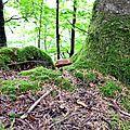 cèpe d'été au-dessus des Arrigaux