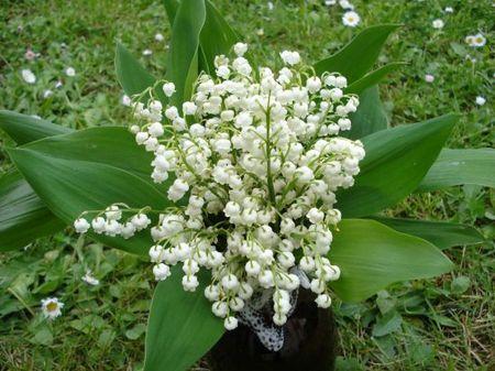 bouquet-de-muguet-du-jardin-1166270625-1200624