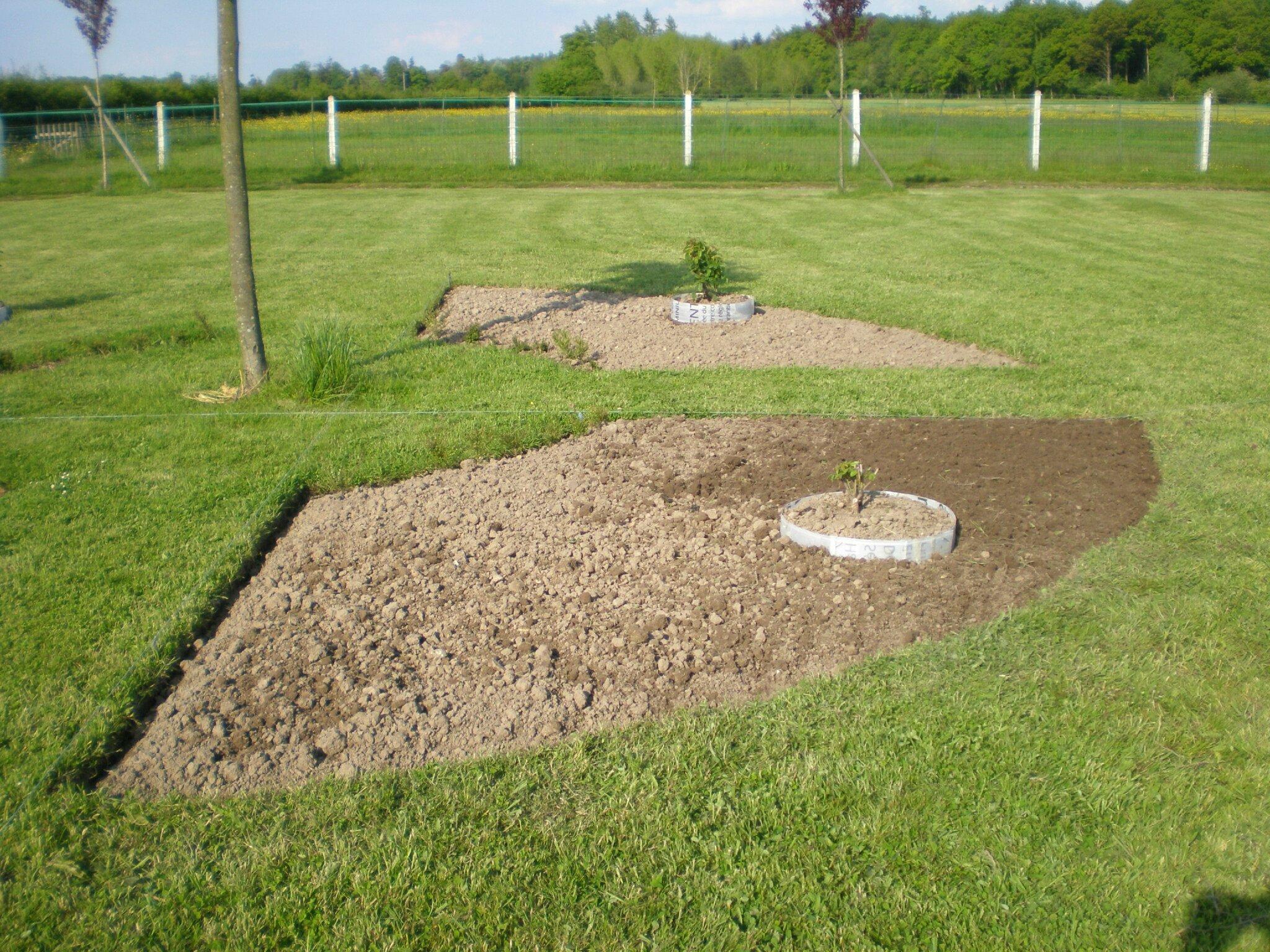 Jardin rond deuxieme quartier termine boutures de for Avoir des poules dans un petit jardin