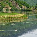 Lac Genos 09061638