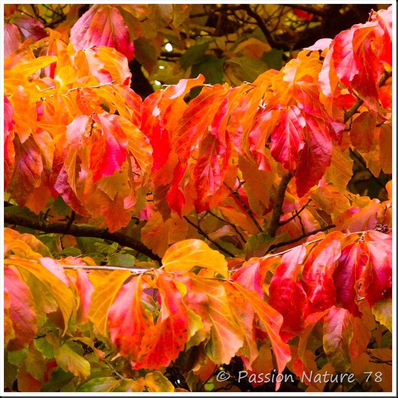 Feuilles en automne (18)