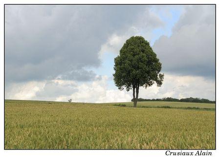 sentier_cornelys_millen_troisvierges_2012_07_10__14