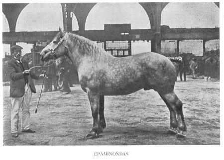 Epamonondas_Champion_1909__estruval___argentine_