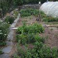 2009 07 14 Une grande partie de mon jardin de fleurs